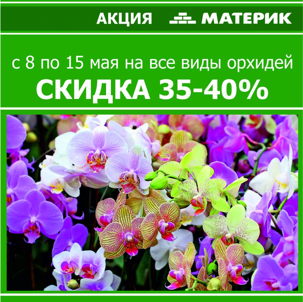 Красавицы-орхидеи по удивительно низким ценам в Материке_акц.jpg